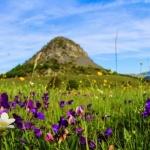 Mont Gerbier de Joncs, à deux pas du Béage